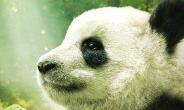 Qian Qian from Pandas the movie