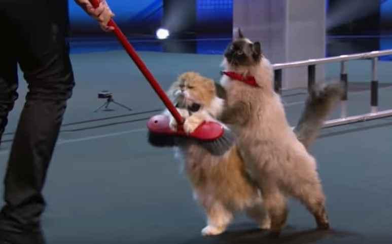 The Savitsky Cats perform