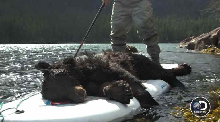The black bear didn't stand a chance with Atz Kilcher and a loaded gun. Pic credit: Discovery