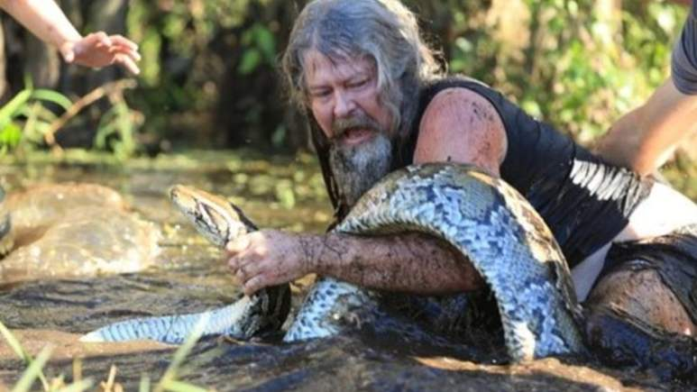 Dusty in action in the Everglades wrangling a python