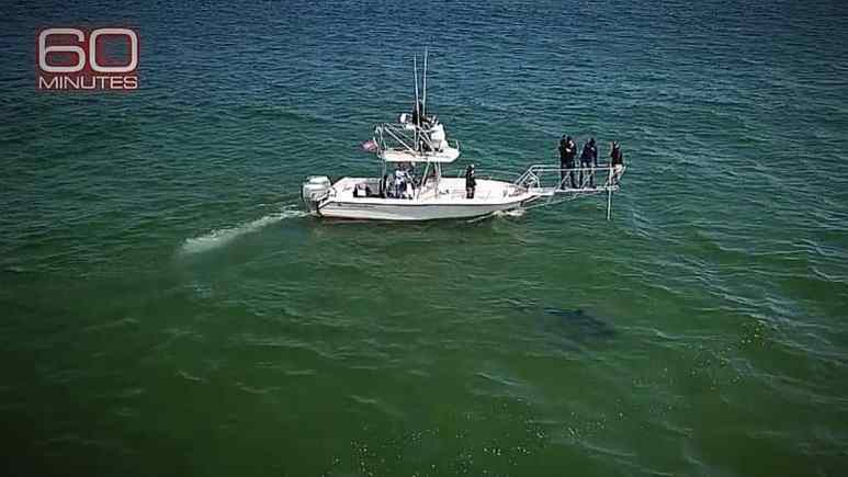 What you cannot see is how close the shoreline is, as this 11 foot shark is just 10 feet from the sandy edge. Pic credit: CBS