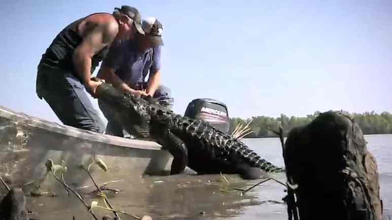 By the episode end, Troy and Terral get Chick's nuisance gator and he's over 12 feet. Pic credit: History.