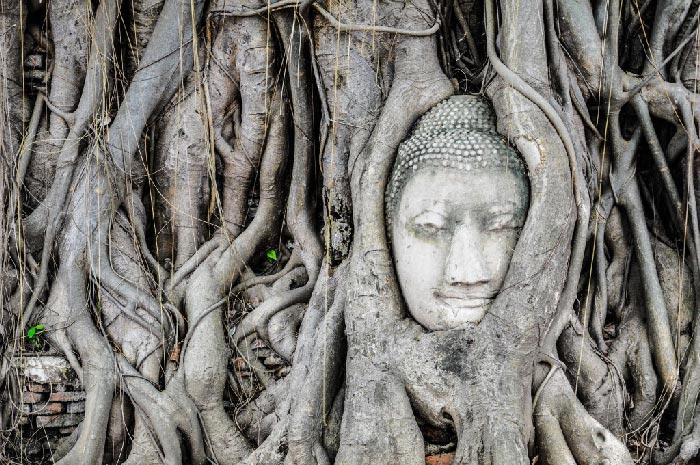 Que-ver-en-Ayutthaya-cabeza
