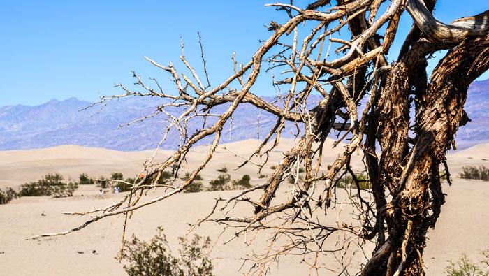 Cómo-ir-al-Death-Valley-desierto