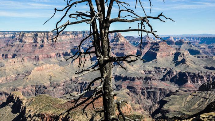 Visita-Grand-Canyon-National-Park-1