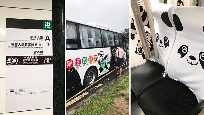 Que-ver-Chengdu-bus-pandas