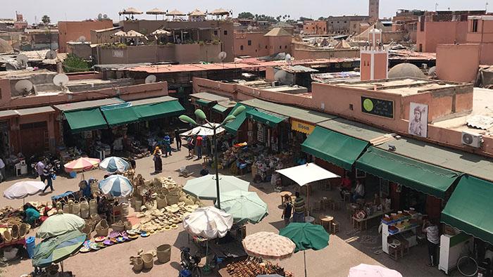 Que-hacer-Marrakech-especies