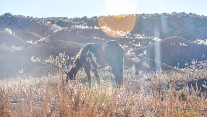 Que-ver-monument-valley-caballo
