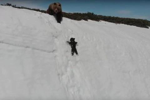 drone, orsi, Magadan, twitter, tecnologia, web, wildlife