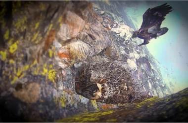 Valsavarenche, Parco Nazionale Gran Paradiso, gipeto, aquila, natura