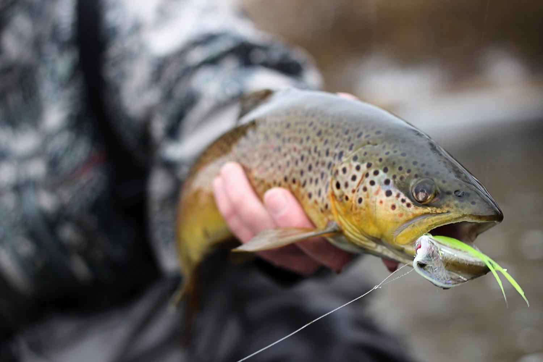 Nc Fish Mercury