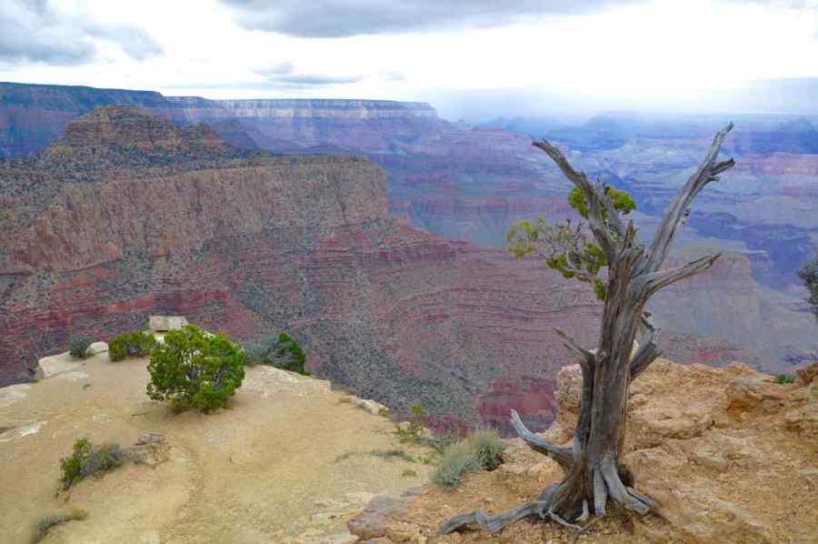 Grand Canyon National Park - Arizona - di Claudio Leoni