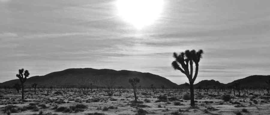 Joshua Tree National Park - California - di Claudio Leoni