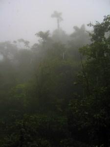 cloud-forest-1-3-2008-9-28-37-am