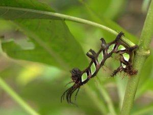 caterpillar-3-30-2009-2-07-16-pm