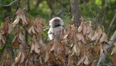white-faced-capuchin-4-25-2009-6-52-37-am