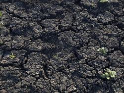 Dry earth 4-26-2009 4-47-06 PM.jpg
