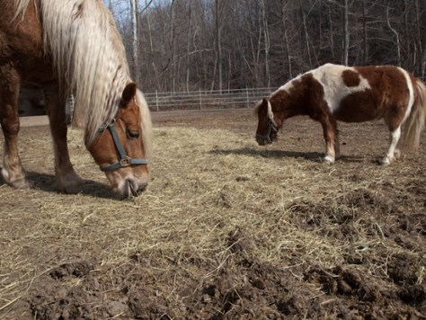 Horses - 04.03.2010 - 08.42.27