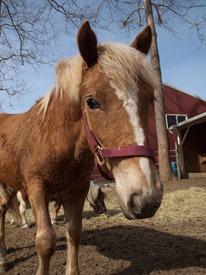 Horses - 04.03.2010 - 08.43.52