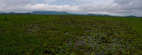 Wetland view - 06.15.2010 - 07.51.04_stitch