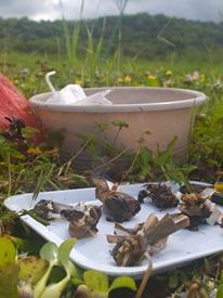 Diversity effects decomposition bundle collection - 07.16.2010 - 08.54.35