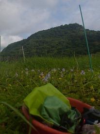 Diversity effects decomposition bundle collection - 07.16.2010 - 08.55.31