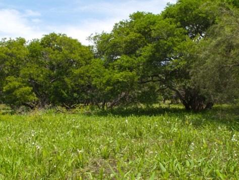 Lazaro Wetland - 06.27.2010 - 11.03.48