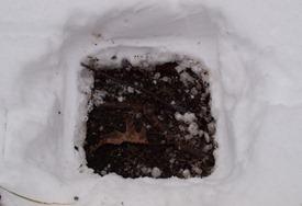 Peter Euclide's winter decomposition - 12.22.2010 - 13.37.05-1