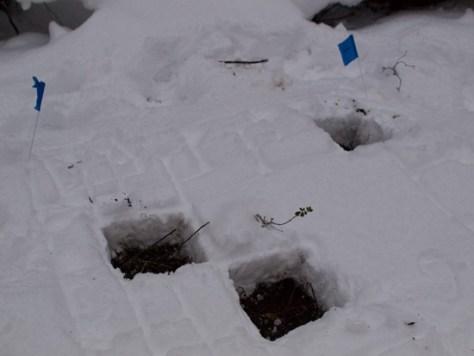 Peter Euclide's winter decomposition - 12.22.2010 - 13.37.29-1