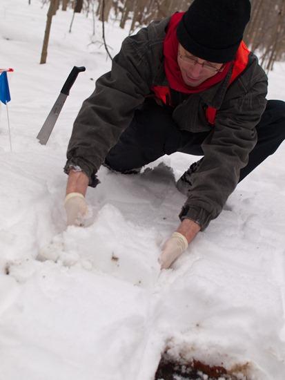 Peter Euclide's winter decomposition - 12.22.2010 - 13.38.11