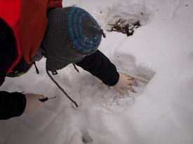 Peter Euclide's winter decomposition - 12.22.2010 - 14.13.14-1