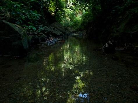Rio La Leona - 02.01.2010 - 10.13.23