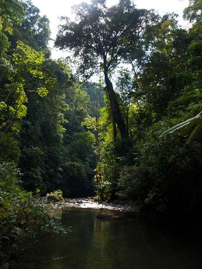 Rio Madrigal - 02.02.2010 - 14.11.14