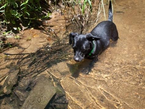 Cascade Springs with Amos - 05.19.2012 - 14.36.28-2