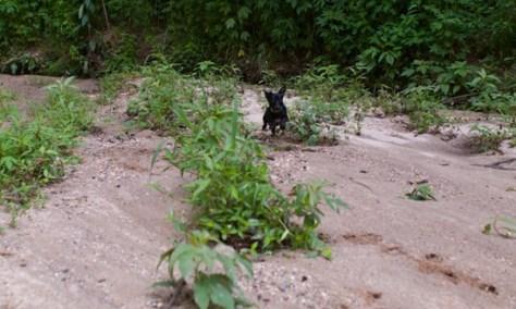 Cascade Springs with Amos - 05.27.2012 - 10.41.48-3
