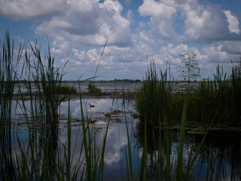 Savannah NWR - Purple Galinuel - 20120901 - 4-2