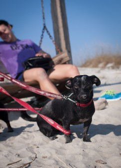 Tybee Island with Amos and Eva - 20130112 - 9