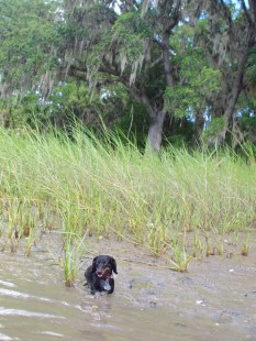 Skidaway Island with the Dogs - 08.11.2013 - 14.03.19