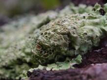 Cumberland island camping trip - Lichens - 11.23.2014 - 14.42.30