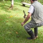 Birding at Finca Cantaros - 20130717 - 27