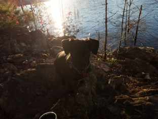 Camping at Mistletoe State Park - 11.23.2015 - 06.46.05