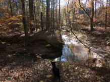 Camping at Mistletoe State Park - 11.23.2015 - 08.44.17