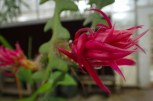 Green house flowers - 05.20.2016 - 12.30.34