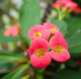 Green house flowers - 05.20.2016 - 12.53.16