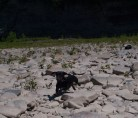 Letchworth State Park with the dogs - 06.04.2013 - 14.24.24