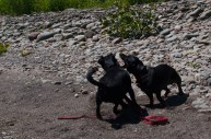 Letchworth State Park with the dogs - 06.04.2013 - 14.32.39
