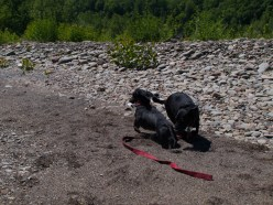 Letchworth State Park with the dogs - 06.04.2013 - 14.33.00