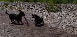 Letchworth State Park with the dogs - 06.04.2013 - 14.33.02-2