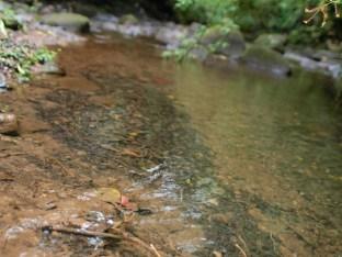 Diffuse litter accumulation in Rio Java