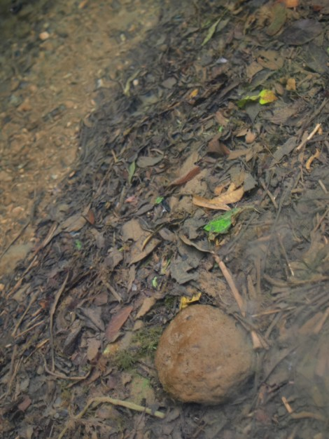 Diffuse litter accumulation in Rio Java